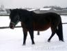 zima2013-jazda-konna-20