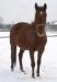 zima2013-jazda-konna-22