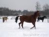 zima2013-jazda-konna-23