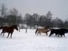 zima2013-jazda-konna-24