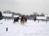 zima2013-jazda-konna-25