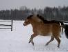 zima2013-jazda-konna-26A