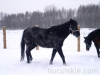 zima2013-jazda-konna-3