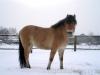 zima2013-jazda-konna-4