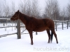 zima2013-jazda-konna-6