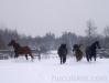 zima2013-jazda-konna-8
