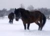zima2013-jazda-konna-9