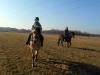 10 konie huculskie zima