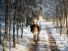 2 konie huculskie zima