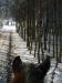 3 konie huculskie zima