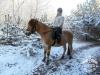 4 konie huculskie zima