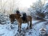 5 konie huculskie zima