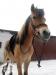 6 konie huculskie zima