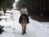 7 konie huculskie zima
