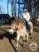 8 konie huculskie zima