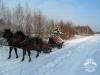 Zima huculskie (4)