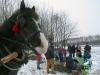 Zima huculskie (10)