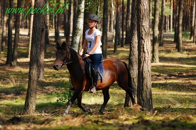 Lato2011-konie huculskie1