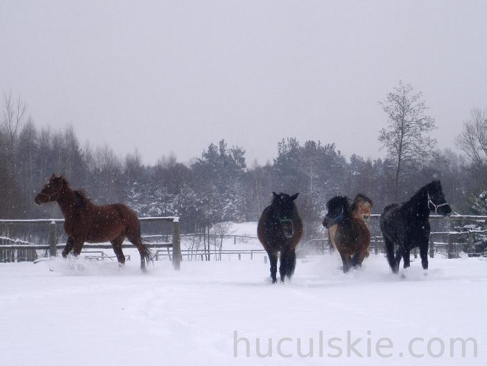 Konie_huculskie_jazda_konna