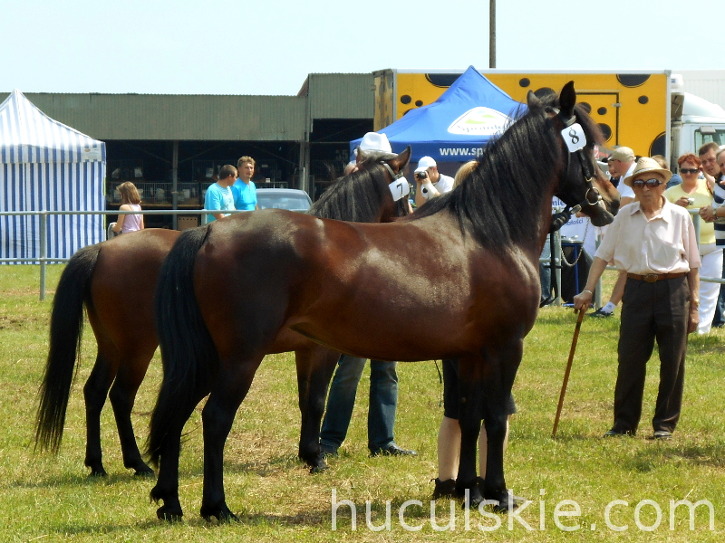 Lato2013-konie-huculskie (6)